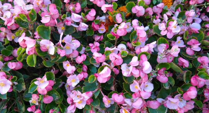 Virágzik Esztergom