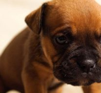 Felfüggesztettet kapott a kutyáját kínzó férfi